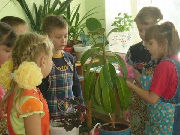 Дети стоят в фартуках возле комнатного растения