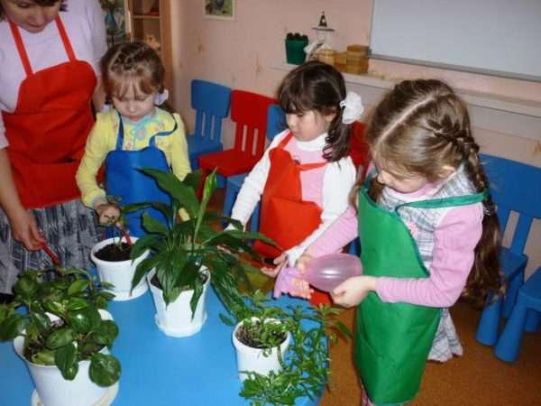 Дети под контролем воспитателя ухаживают за растениями