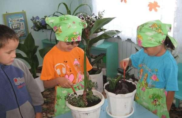 Воспитанники средней группы ухаживают за комнатными растениями