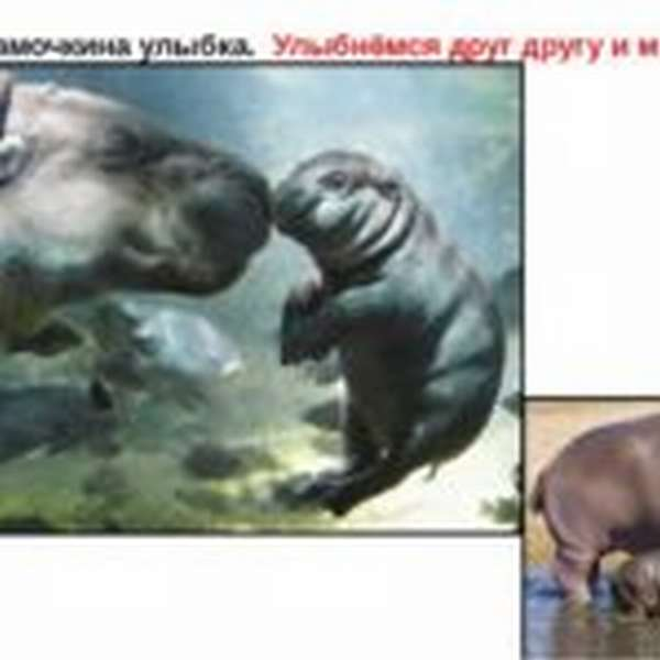 Улыбающиеся бегемоты