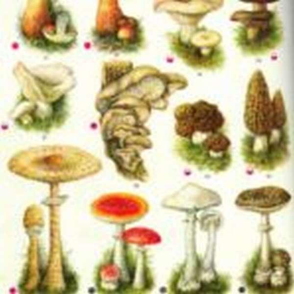 Пособие по изучению разных видов грибов