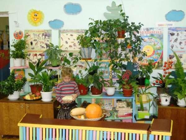 Центр экологического развития в детском саду