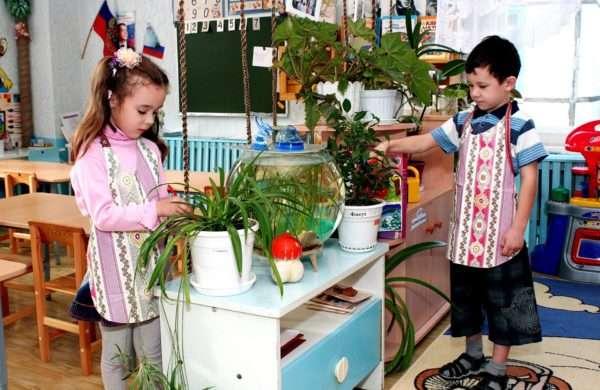 Дети ухаживают за растениями