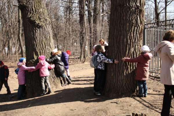 Ребята обхватывают стволы деревьев