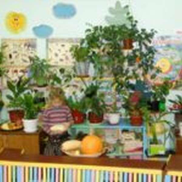 Девочка изучает овощи в зелёном уголке