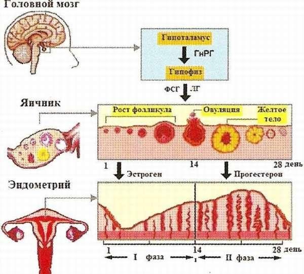 В отдельных случаях необходима регуляция менструального цикла, чтобы избежать серьезных проблем со здоровьем