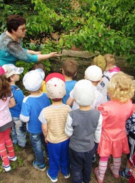 Воспитатель показывает детям растения на прогулке
