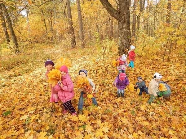 Дети собирают листья в осеннем лесу