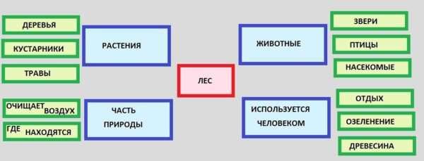 Структурно-логическая схема по теме «Лес»