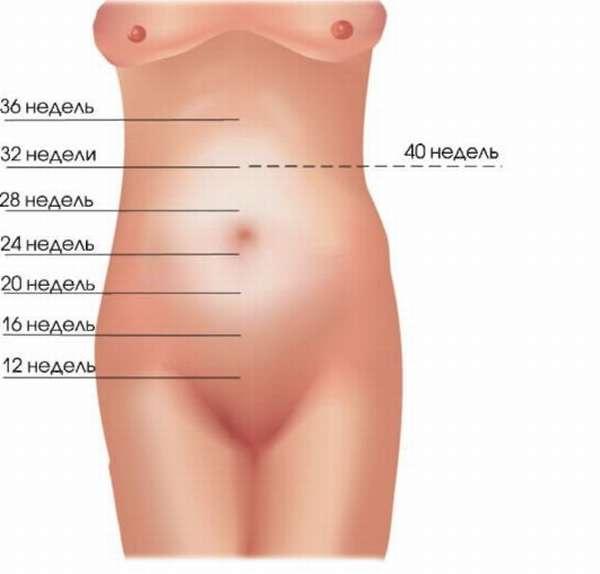 Чаще всего высота дна матки увеличивается согласно описанным выше нормам
