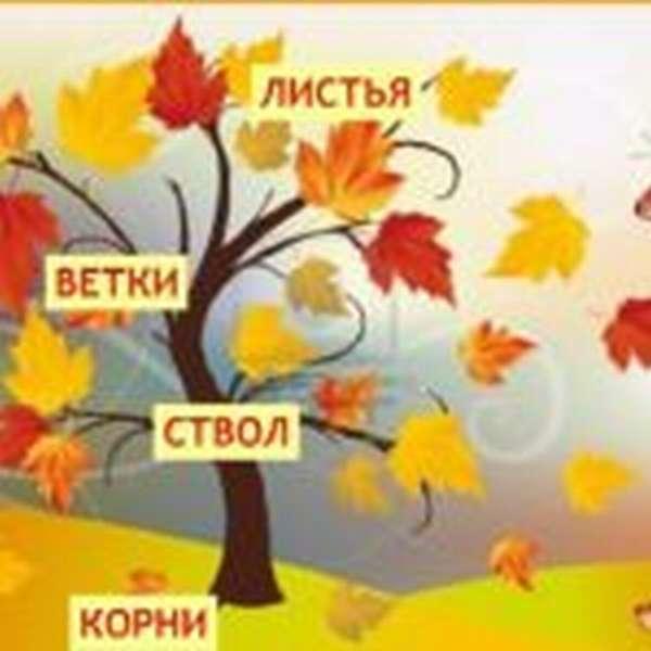 Картинка с указанием составных частей дерева