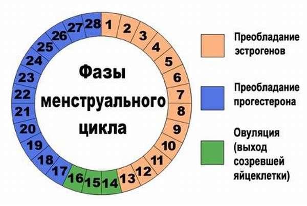 Рассчитать овуляцию можно самостоятельно, но наблюдение вести нужно несколько месяцев