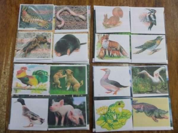 Маленькие карточки с животными на больших карточках