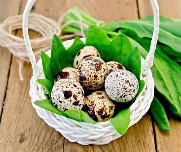Очень полезными во время беременности являются перепелиные яйца