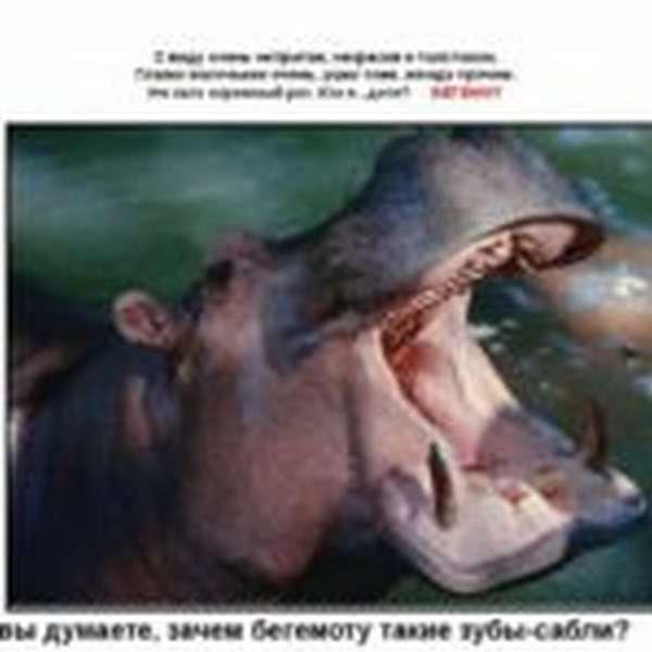 Загадка о бегемоте