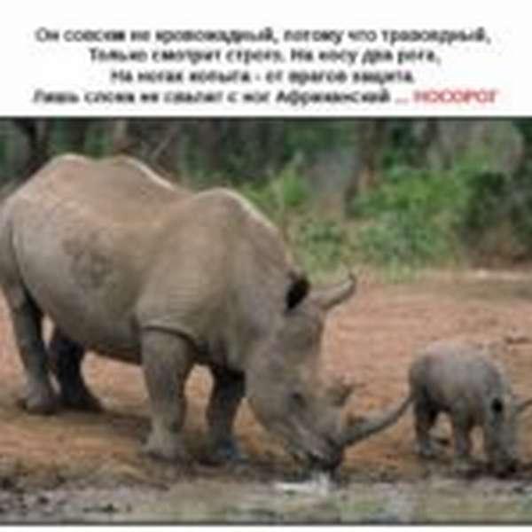 Загадка о носороге