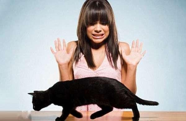 беременность и кошки примета