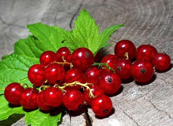 Из красной смородины можно делать не только варенье, но и вкусный компот