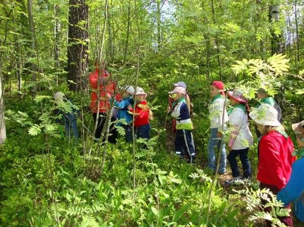 Дети и воспитатель идут по лесной тропинке