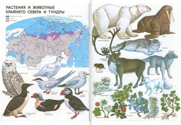 Страница из географического атласа