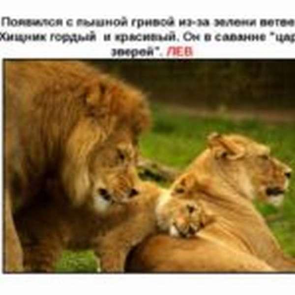 Загадка о льве