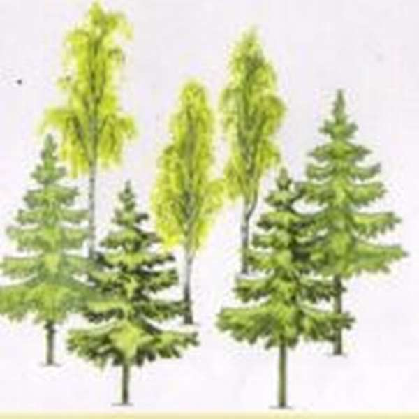 Деревья задание по математике