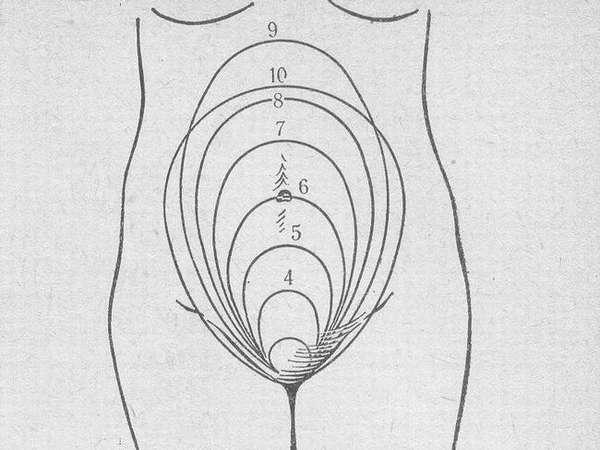 Высота дна матки по неделям беременности - важный показатель