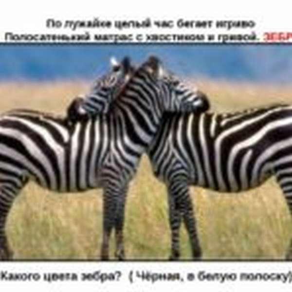 Загадка о зебре