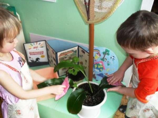 Дети вытирают листья комнатного цветка